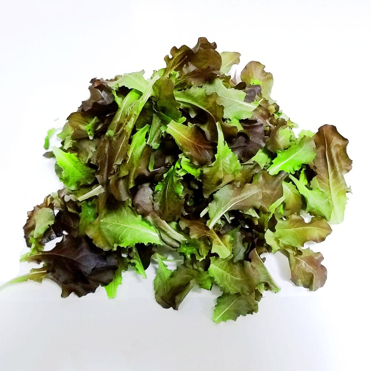 プチ・リーフ≪レッドサラダ≫ 50g(たっぷりサイズ) [有]