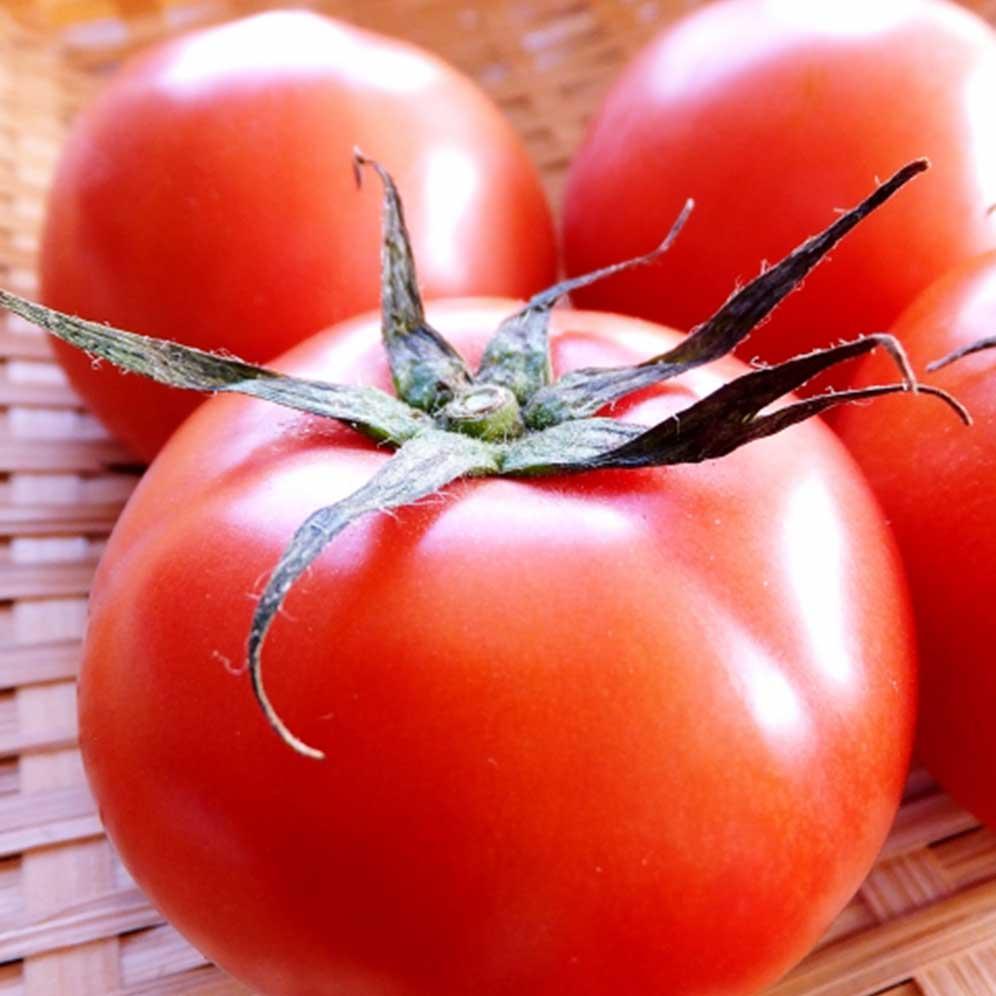 大玉トマト《ナチュラル》