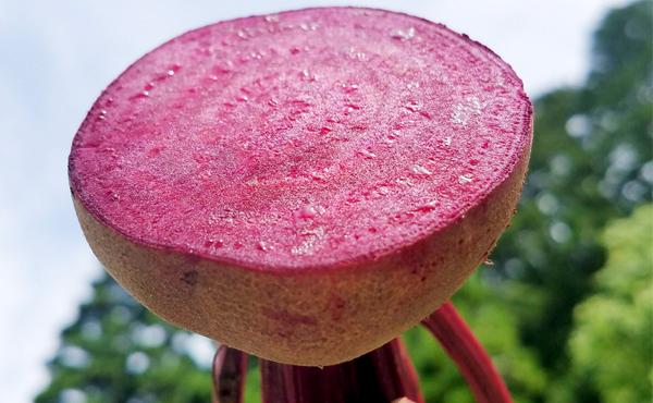 <span>ネイチャー ビーツ</span>インスタ映えNo.1 アスリートも認める《奇跡のスーパーフード》無農薬Nature beets