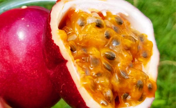 <span>パッションフルーツ《エキストラ・ルビースター》</span>なんとマンゴーも超える糖度を誇るとんでもない逸品