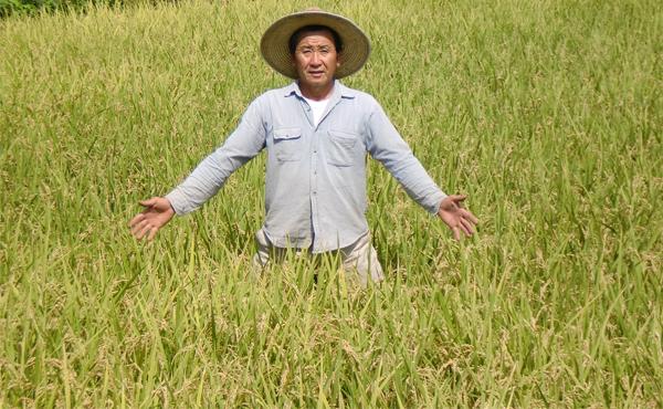 <span>無農薬米 森のくまさん</span>もちもちでふっくらは愛情と還元塩栽培のおかげ