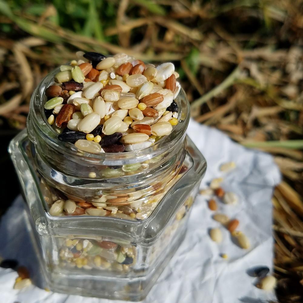 流水で軽くすすぎ 白米一合に小さじ1~2杯が目安(水加減は普通でOK)玄米と炊いても美味しくいただけます