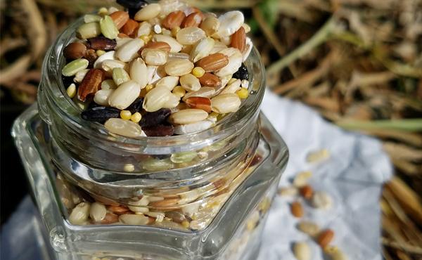 <span>JAS有機認証 熊本十穀米</span>本物の無農薬・無農薬化学肥料 命をかける本物の生産者がいます