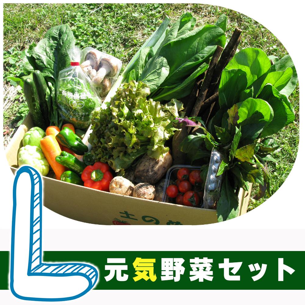 元気野菜 L セット