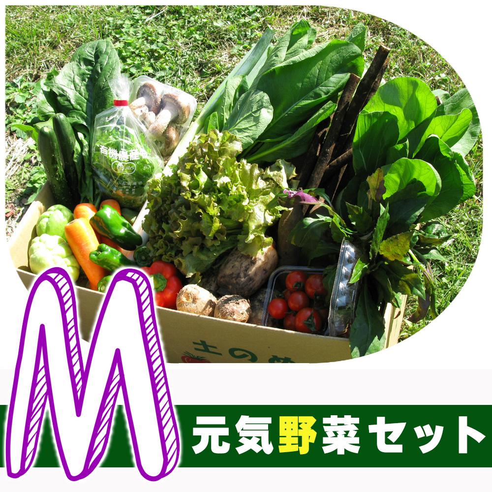 元気野菜 M セット