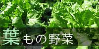 葉もの野菜
